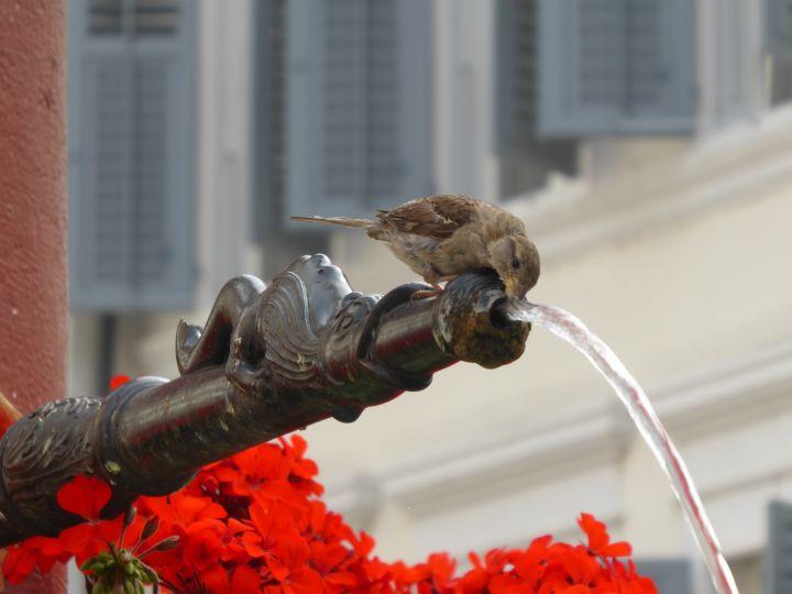 die Trinkwasserversorgung