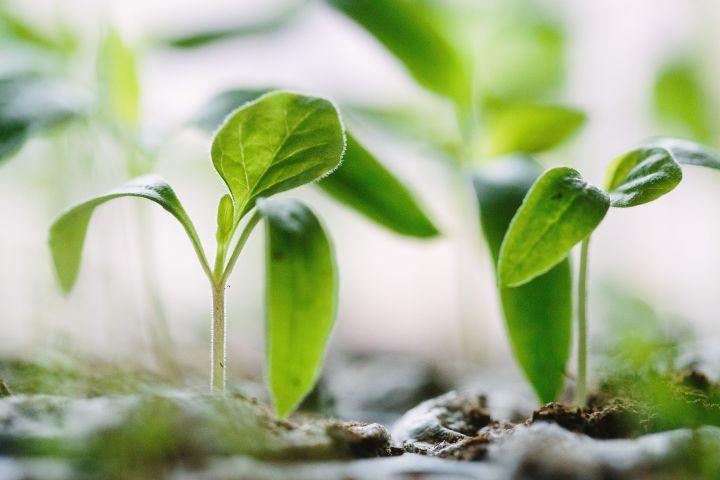 Die Eurasische Wirtschaftskommission begann mit Antidumpingermittlungen gegen Hersteller von Herbiziden aus der EU
